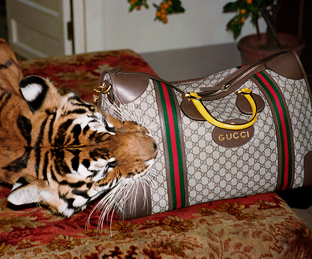Gucci SS17: Alessandro Michele unveils Wild in Rome campaign (фото 13)