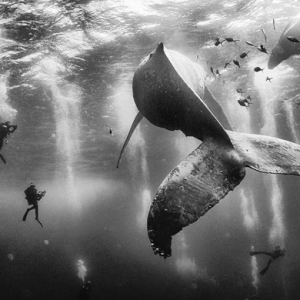 Revealed: The winners of the 2015 'National Geographic Traveler' photo contest