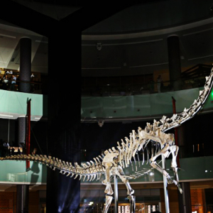 155 million year-old dinosaur takes up new residence in The Dubai Mall