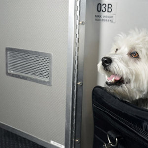 American Airlines introduces first class cabins for pets