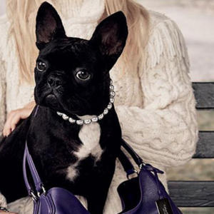 Move over Neville: Lady Gaga's pet pooch books first fashion campaign