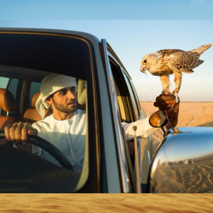 Sheikh Hamdan works to revive ancient sport of falconry in the UAE