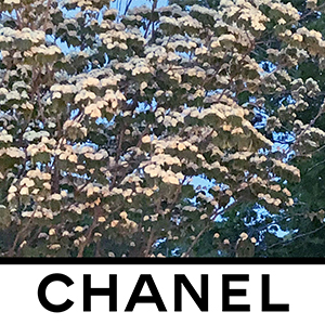 Chanel invites you to its Fall/Winter '20 show in Paris