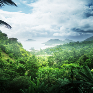 Dubai's Damac announce plans to create Middle East's first tropical rainforest