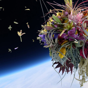 Japanese artist sends 50 year-old Bonsai tree into space