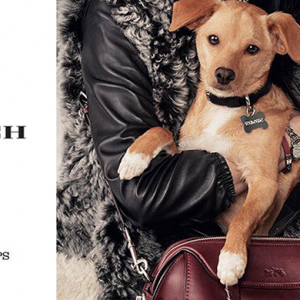 Miranda Kerr and Ariana Grande's pet pooches join Coach campaign