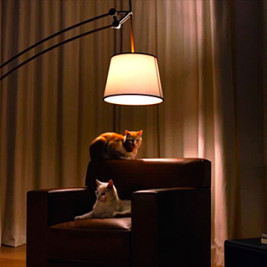 Watch now: Hermès are 'feline' the light with a new video campaign