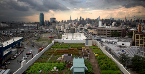Take a look at this 42,000 square-foot rooftop farm in New York