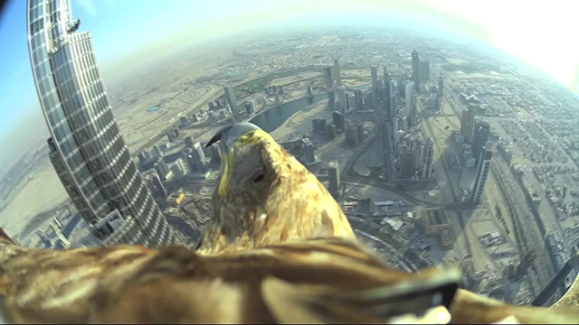 Record-breaking 'Eagle Cam' captures flight from top of Burj Khalifa